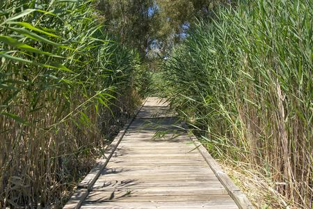 rushes: the long boardwalk through the reeds and rushes at banrock station