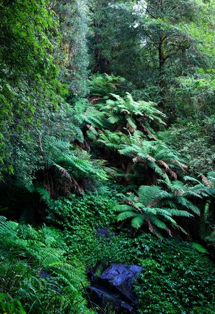 bushy plant: oxley world heritage rainforest ferns and plants on a wet day