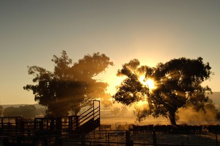 enclosures: sunrise coming through the trees with rays of light over cattle and cattleyards
