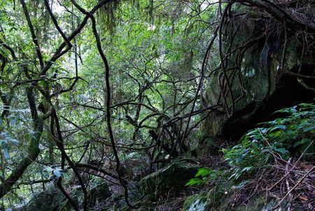 liquen: musgo y liquen que abarca las plantas, rocas y �rboles en el mundo Oxley patrimonio selva