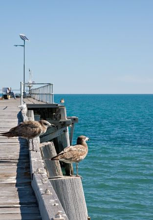 two seabirds (petrels) stand on the edge of the jetty and look out over the water  Stock Photo - 908843