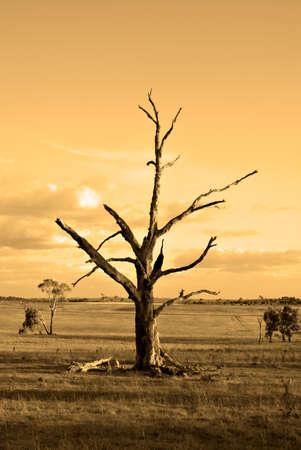 days gone by: an old dead tree in the farmland in orange symbolising autumn (fall) or the end of an era Stock Photo
