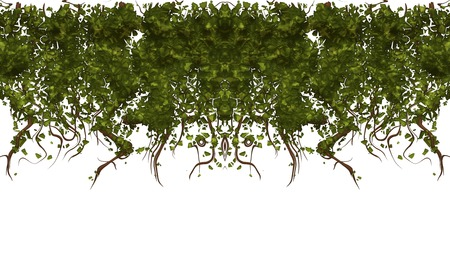 drooping: large illustration of ivy or vines hanging down