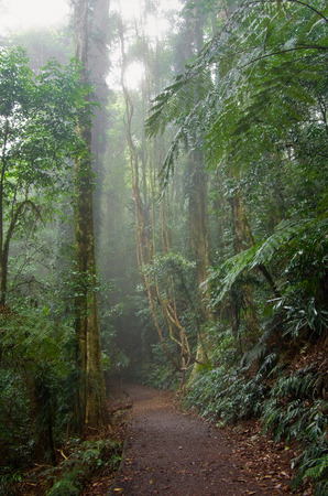 the beauty of nature in the dorrigo world heritage rainforest on a foggy day photo