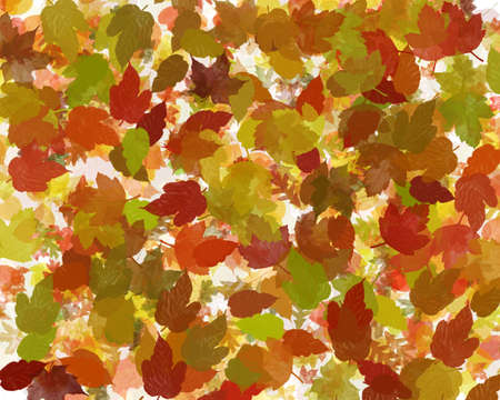 a collection of autumn leaves scattered over a bright light table Stock Photo - 1621269