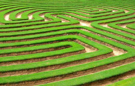 cut grass: grass lawn cut into a maze like puzzle pattern