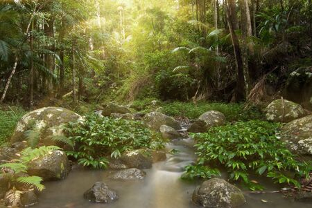 rays of sunlight stream through the rainforest  photo