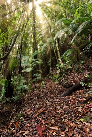 light rays shine through in the rain forest Stock Photo - 2474670