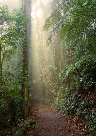 lightbeam: light beam in the beauty of the dorrigo world heritage rainforest