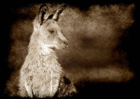 droughts: an image of an small eastern grey kangaroo in the wild in brown grunge