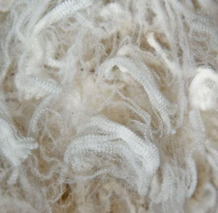 prize winning superfine merino wool as a background image Stock Photo
