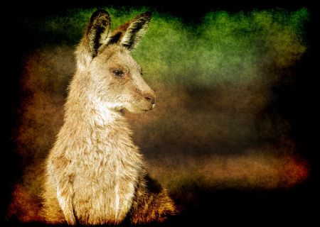 gritty: an image of an small eastern grey kangaroo in the wild gritty grunge style