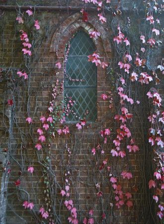 great  image of vines growing up the church wall photo