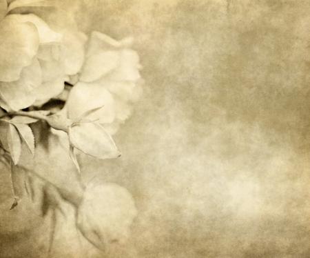 pergamino: desgastado viejo pergamino con rosas de papel de fondo