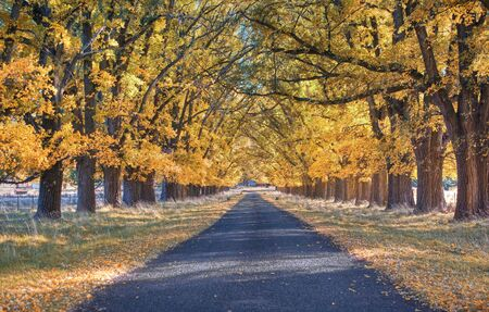 great image of an tree lined road in autumn Stock Photo