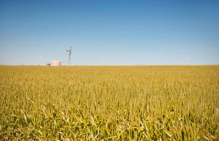 windmill in fields of wheat in the countryside at burra south australia Stock Photo
