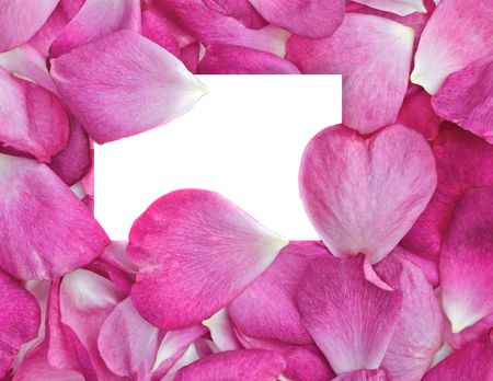 rose petals: beautiful pink rose petals with white card for your message Illustration