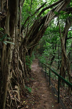 darwin: a great image of a path through a rainforest in darwin