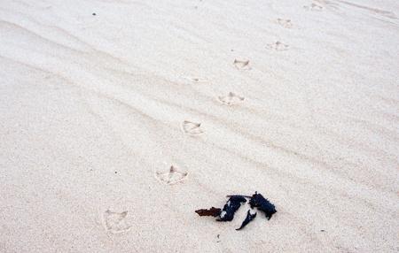 vogelspuren: Seagull Vogel verfolgt in den wei�en Sand am Strand