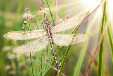 hatched: beautiful image of a young newly hatched dragonfly