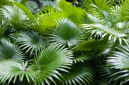 tropical rainforest palm background Stock Photo - 9598479