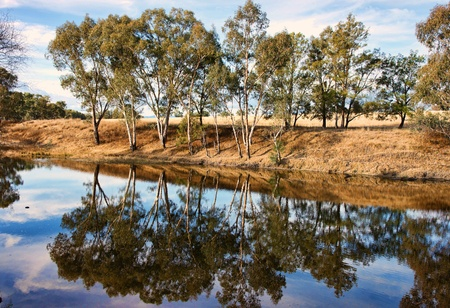 gums: river gum trees reflecting in river Stock Photo
