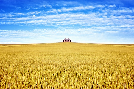 wheatfield: old house in the field of wheat