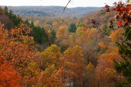ozarks forest in fall photo