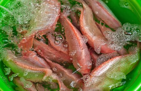 city fish market: fresh fish for sale Stock Photo