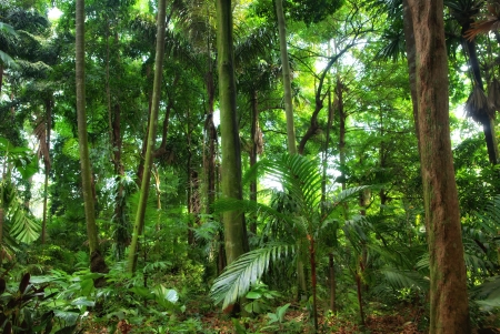 national plant: beautiful rain forest trees