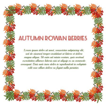 sfondo natura: Modello autunno con bacche di sorbo. Priorit� bassa della natura. Illustrazione vettoriale. Vettoriali