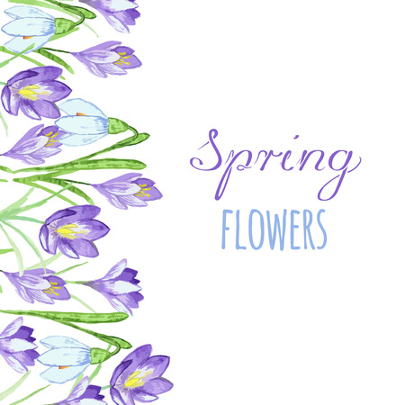 Early spring purple crocus and snowdrops nature beauty flowers vector. Crocus snowdrops flower color and purple crocus bouquet petal natural bloom. Pring purple crocus and snowdrops.