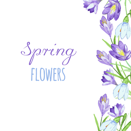 crocus: Early spring purple crocus and snowdrops nature beauty flowers vector. Crocus snowdrops flower color and purple crocus bouquet petal natural bloom. Pring purple crocus and snowdrops.