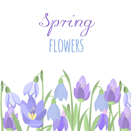 crocus: Early spring purple crocus and snowdrops nature beauty flowers vector. Crocus snowdrops flower color and purple crocus bouquet petal natural bloom. Purple crocus and snowdrops.