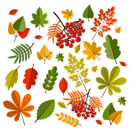 Collection beautiful colorful autumn leaves isolated on white background. Color maple bright season red and orange autumn leaves. Nature fall yellow leaf autumn leaves seasonal forest symbols. Illustration