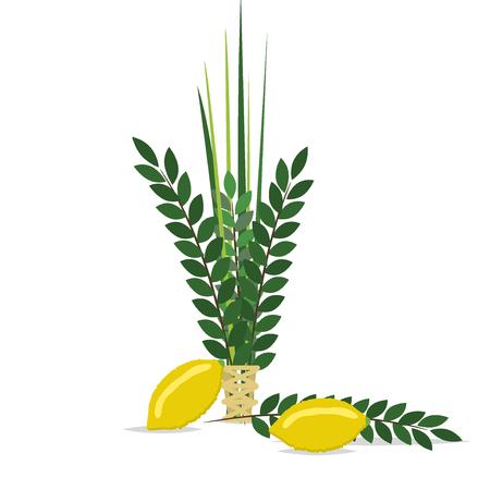 citron: Sukkot Jewish holiday. Jewish torah with Lulav date palm, Etrog citron, Arava willow and Hadas myrtle Jewish festival Sukkot species lulav. Palm branch, willow and myrtle leaves, etrog.
