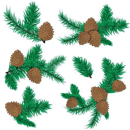 evergreen: Pine cone christmas decoration. Nature pine cone decoration spruce xmas green forest elements. Evergreen holiday pine cone branch set. Forest plant evergreen pine branches. Illustration
