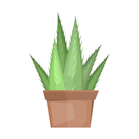 Cactus desert plant blossom flora succulent cartoon cacti. Prickly cactus plant thorny spiny. Desert mexican tropical cactus summer garden plant. Houseplant exotic vector cactus green flower desert. Illustration