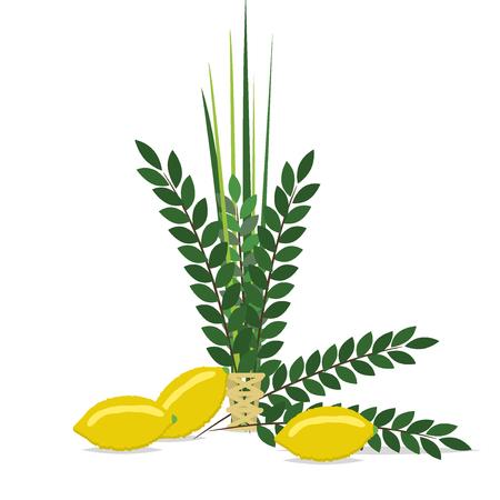 Jewish festival of Sukkot traditional symbols judaism religion festival citrus willow vector illustration.