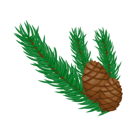 Pine branch with cones on a white background vector illustration. Nature fir christmas green pine tree with cone.