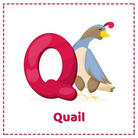 Alphabet printable flashcards vector with letter Q. Cartoon happy Quail bird vector character. Little farm animal.
