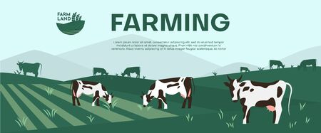 Cows farming on green meadow agricultural business concept. Calves eating fresh herb. Rural animal field vector illustration. Cattle livestock farmer industry banner. Illustration