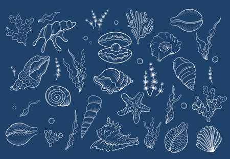 Sea shell pearl line art. Summer time beach shell. Vector hand drawn seashell. Nature ocean sketch mollusk. Water marine exotic animal, Scallop underwater tropical cockleshell.
