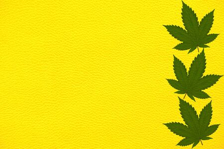 Genuine yellow skin with a pattern of green hemp leaves.