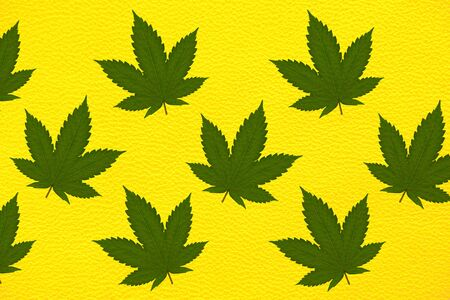 Genuine yellow skin with a pattern of green hemp leaves .. Stock Photo