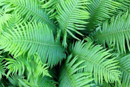 Natural fern leaves. Background of parrots.
