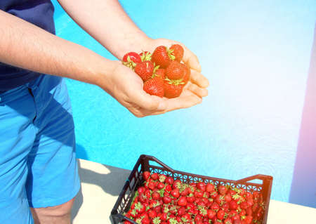 Ripe fresh strawberries in a plastic black basket after collecting sweet red berries on a background of blue water.