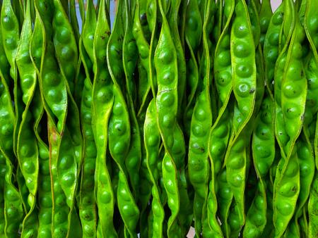 Parkia speciosa  seeds are a  vegetable food Standard-Bild - 122132218