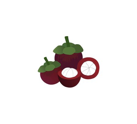 Mangosteen and half Mangosteen  color realistic. Vector illustration. Illustration