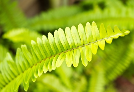 Fresh green fern leafs in the forest Stock Photo - 15648600